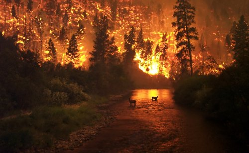 ЧС из-за пожара в Нацпарке объявлен в Карагандинской области
