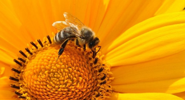 Что будет, если все пчелы на Земле погибнут