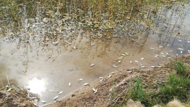Массовая гибель рыбы произошла в СКО