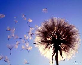 Усиление ветра  обещают синоптики казахстанцам в понедельник  9 сентября
