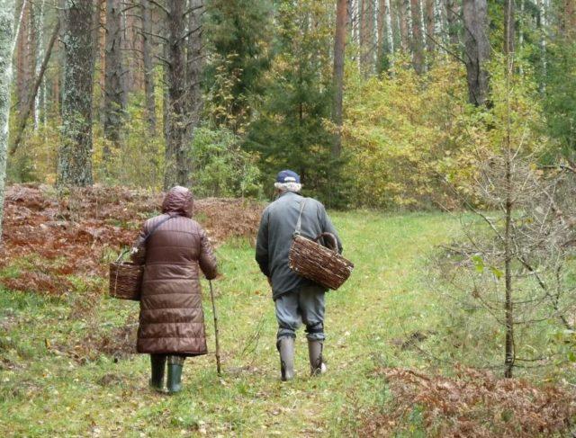 Грибники нашли в лесу тело пропавшего жителя Костанайской области