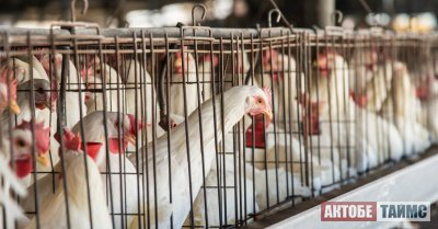 Сбор подписей: Люди требуют перенести птицефабрику за город