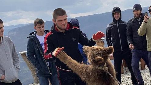 Зоозащитники пожаловались UFC на Хабиба за борьбу с медведем