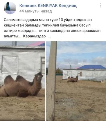 На мальчика в Актюбинской области напал верблюд