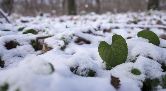 Дождь и снег ожидаются в Казахстане