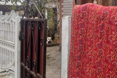 Голодный алабай напал на главу экологического фонда в Актобе