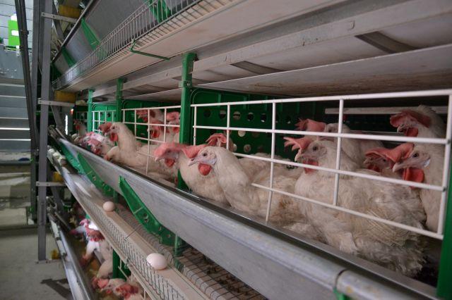 В Актобе не могут решить проблему с отходами птицефабрики