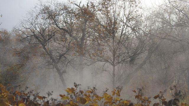 Мокрый снег и заморозки ожидаются 12 октября в Казахстане