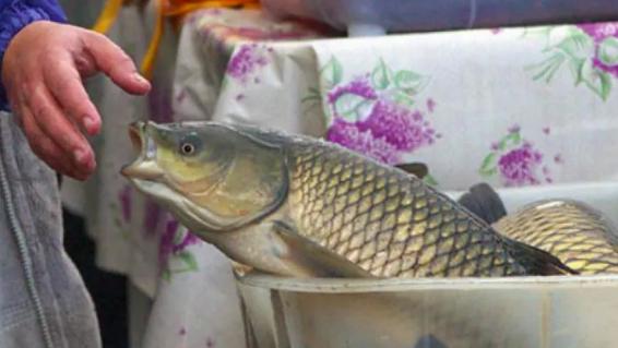Удобрения, рыба и машина: какие взятки получают казахстанские чиновники