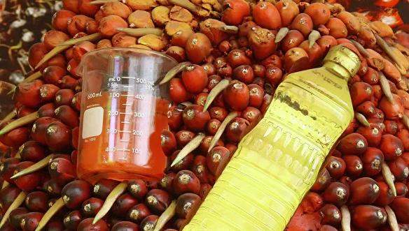 Африканское сало. Как пальмовое масло влияет на здоровье