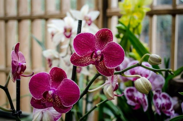 Флорист рассказала, какие цветы несут угрозу личной жизни