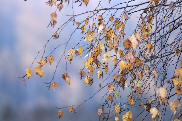 Погода без осадков ожидается на большей территории Казахстана 18 ноября