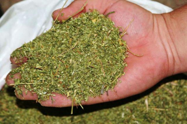 Более 15 кг марихуаны изъяли у ранее судимого актюбинца