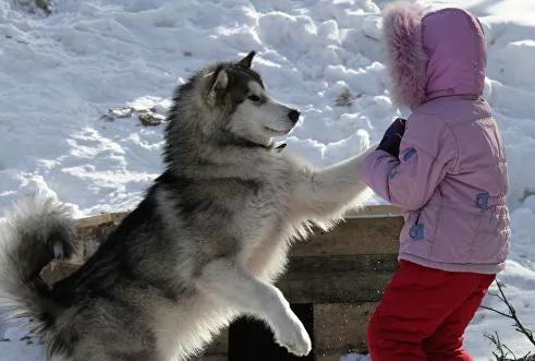 Биологи вывели формулу перевода собачьего возраста в человеческий