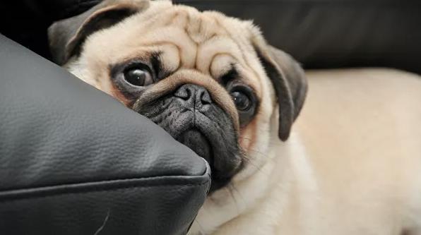 Ветеринары рассказали о рисках содержания собак и кошек редких пород