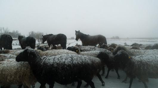 Министерство сельского хозяйства запретило экспорт живого скота из Казахстана