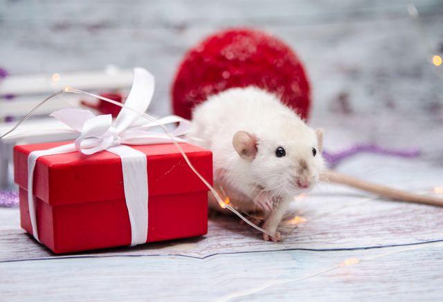 Как правильно встретить Новый Год Крысы по восточному календарю