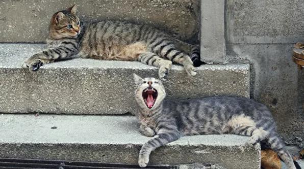 В Польше заподозрили котов в возможном распространении коронавируса