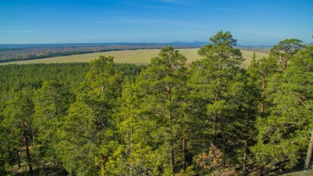 Казахстан планирует увеличить площадь лесов с 4,6 до 5 процентов