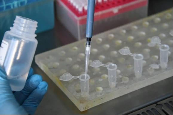 Ученые создали экспресс-тест на коронавирус