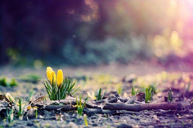 Какая погода ожидается в Казахстане 26 марта
