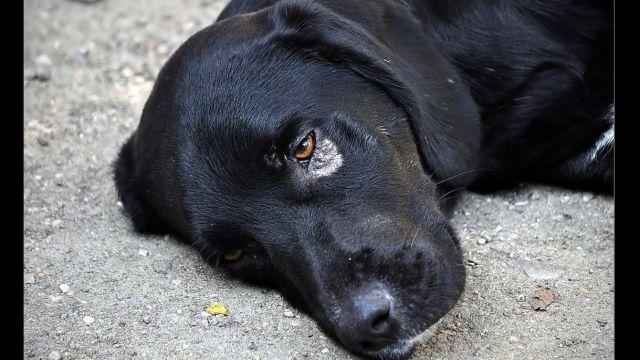Пожалуйста, не убивайте - собаку усыпили на глазах хозяйки в Семее