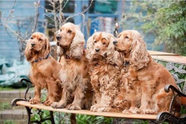Смогут ли собаки определять коронавирус по запаху?