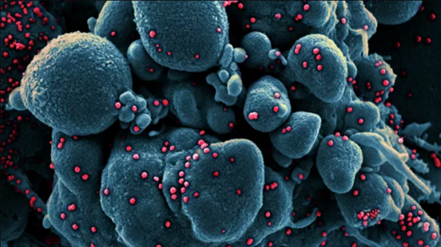 Ученые определили вероятный пик пандемии коронавируса