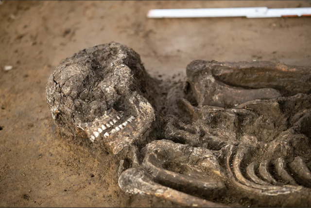 Генетики выяснили, от кого произошли европейцы