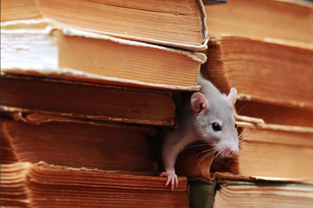 """Фотограф из Великобритании построил """"деревню хоббитов"""" для мышей"""
