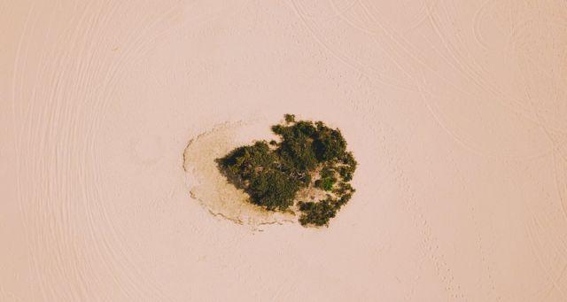 Китайская пустыня превратилась в оазис после 70 лет озеленения