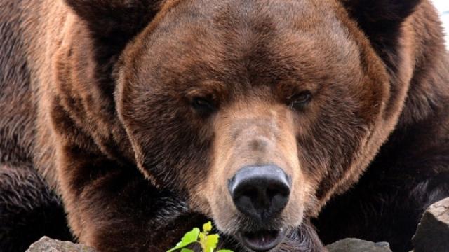Медведь убил россиянина в Алматинской области