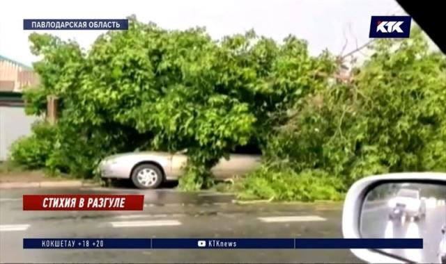 Поваленное ураганом дерево убило 16-летнего подростка