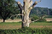 Почему в Актобе гибнут деревья, объяснил бывший директор лесхоза