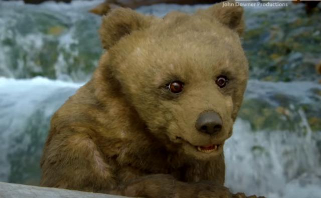 """Ученые """"внедрили"""" в семью медведей робота-шпиона"""