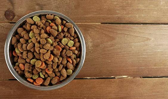 Кинологи рассказали, чем нельзя кормить собак