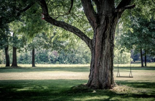 15 млн деревьев высадят в Казахстане в ближайшие пять лет