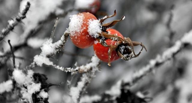 Заморозки ожидаются в Казахстане
