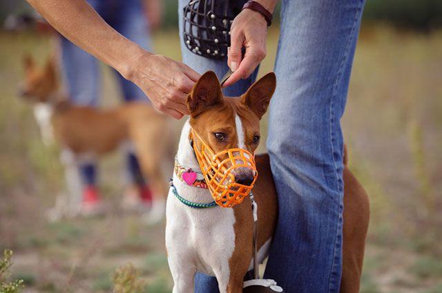 Как выбрать собаку и кому не нужен намордник? 12 вопросов кинологу