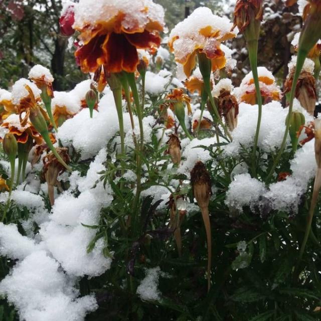 В Алматы выпал первый снег