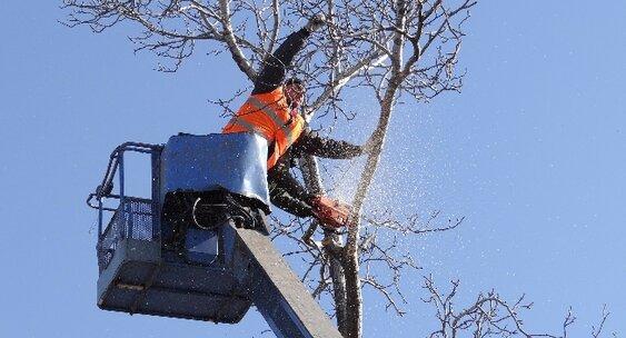 Очередная массовая вырубка деревьев возмутила казахстанцев