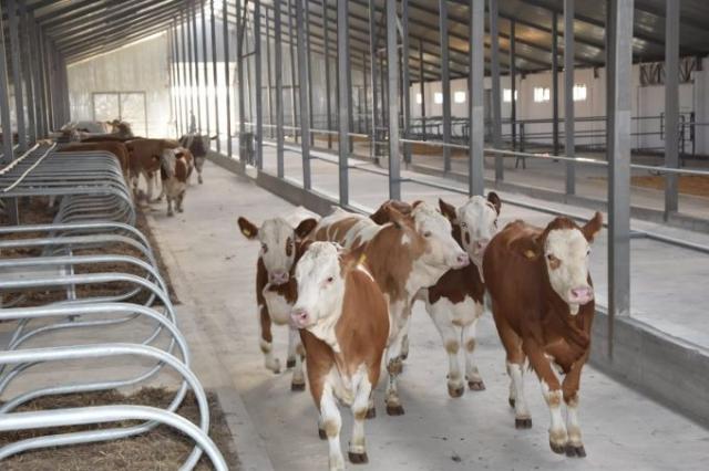 Две тонны молока в сутки будет производить новая молочно-товарная ферма в Акмолинской области