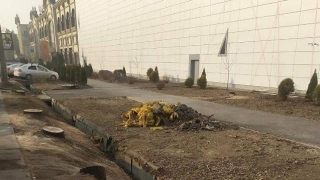 Вырубленные в Алматы деревья занесены в Красную книгу - Управление зеленой экономики