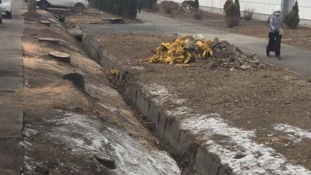 Установлен основной фигурант по делу вырубки деревьев в Алматы