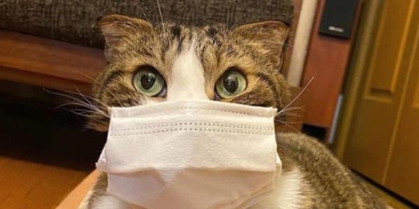 Казахстанцы массово отказываются от домашних животных из-за страха заразиться коронавирусом