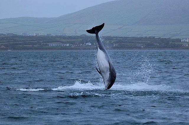 «Возможно, Путин». В Ирландии президента России обвинили в пропаже дельфина