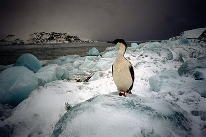 Обнародованы детали секретной экспедиции нацистов в Антарктиду