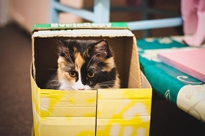 Зоопсихолог раскрыл причину тяги кошек к коробкам