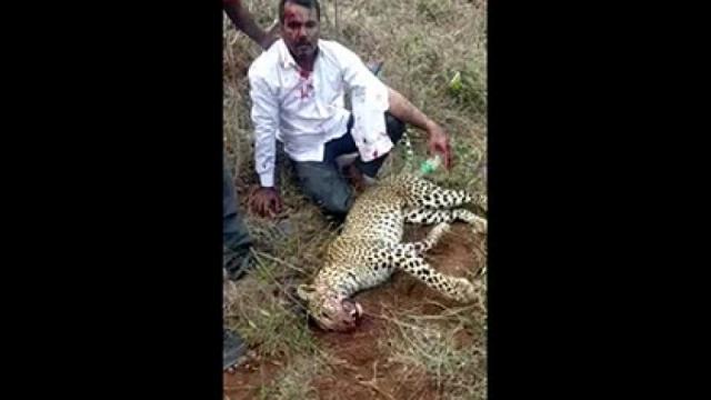 Мужчина убил леопарда голыми руками для спасения жены и дочери