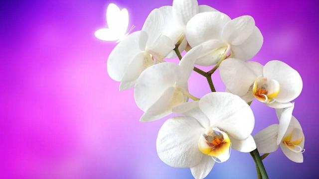 Ученые вывели новый сорт орхидеи к 8 Марта